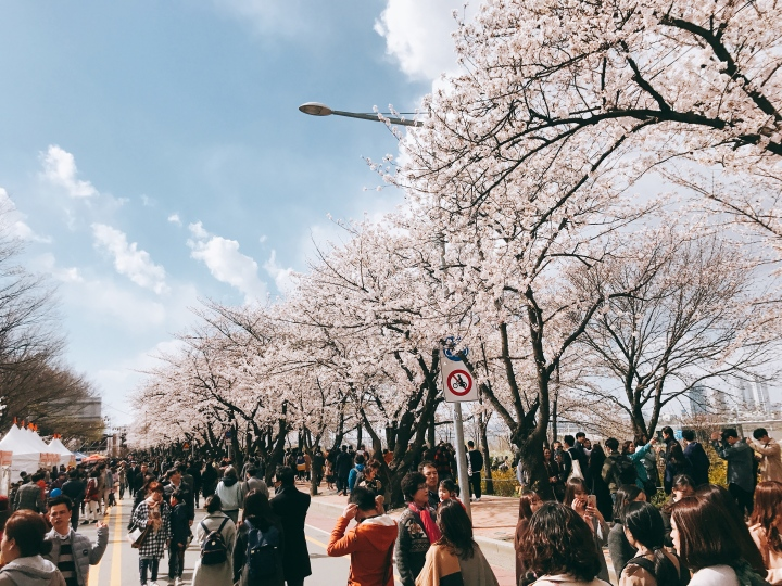 【韓國】汝矣島賞櫻、蠶室棒球場